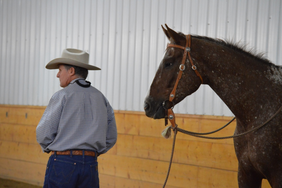 Joe Wolter Horsemanship Clinic 2015
